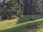 Takapihan nurmikko
